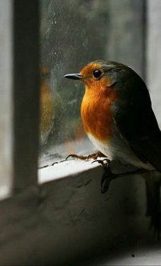 New Robin Bird Flying Pictures 18 Ideas All Birds, Little Birds, Love Birds, Pretty Birds, Beautiful Birds, Animals Beautiful, Beautiful Things, Animals And Pets, Baby Animals