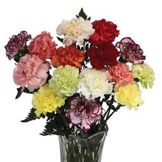 Mixed Carnations 15 Stems from Jersey Plants Direct A Classic Bouquet to Suit All Occasions! Order by and we will despatch your gift the same day Carnation Bouquet, Carnations, Mothering Sunday, Coffee Plant, Gifts Delivered, Flower Food, Large Plants, Color Mixing, Special Occasion