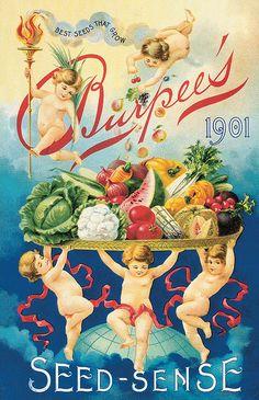 Burpee's Seed Sense. 1901 @@@@.....http://www.pinterest.com/mamosh9/posters-advertising-calendars-brochures-packaging-/