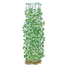 Gardener's Supply Bean Tower buy this tall vegetable support with a thicker frame coupled with legs that hold the structure securely in the ground. The bean tower in our test garden yielded beans between mid-July and late September Bean Trellis, Tomato Trellis, Garden Trellis, Grean Beans, Bean Plant, Garden Supplies, Garden Projects, Garden Ideas, Lawn And Garden