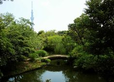 Mukojima-Hyakkaen Gardens Is a traditional Japanese garden inspired by ancient Chinese poems with views of the Tokyo Skytree. Tropical Greenhouses, Tokyo Travel Guide, Temple Gardens, Cherry Blossom Season, Wild Grass, Winter Plants, Small Waterfall, Urban Park, Garden Park