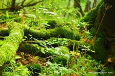 Moss Covered Forest Floor - The Photography Network - PictureSocial