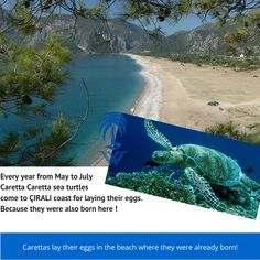 Beach Mat, Turtle, Coast, Outdoor Blanket, Sea, Turtles, Tortoise, The Ocean, Ocean