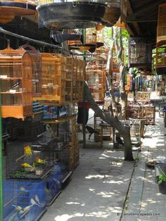Visite de la ville de Yogyakarta, Java - Carnet d'escapades