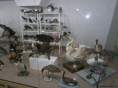 The eco museum - Ruse, Bulgaria