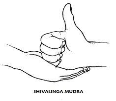 #shivalinga #mudra Las manos están situadas a la altura del abdomen y los codos se abren hacia los lados. Tantas veces como quiera o 2 veces al día durante 4 minutos. Se emplea contra el cansancio, la insatisfacción, el abatimiento, las depresiones o para aliviar el agotamiento. También se puede practicar en los tiempos de espera de cualquier sitio. Ayuda a que prosperen los procesos de curación, sin que importe el estado ni el tipo de enfermedad.