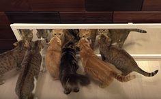 Chats Prendre sur les miroirs, Confusion Ensues  Ces chats peuvent pas tout à fait comprendre miroirs. Qui sont ces autres chats de toute façon?