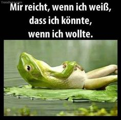 Memes: The Most Entertaining Thing You'll Ever Read in German - Famous Last Words Satire, Funny Cute, Hilarious, Boyfriend Memes, Famous Last Words, True Words, True Stories, Funny Animals, Animal Memes