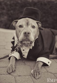 What a stud | @Studio EMP Photography. #wedding #pets