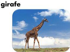 """SlideShare """"Les animaux"""" en français (photos et mots)"""
