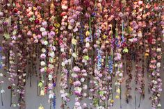 Rebecca Louise Law - RHS Chelsea Flower Show