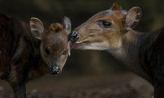 Una madre besando a su hija en San Diego. - AFP.