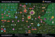 Immunologic Networks 2011