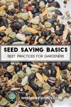 Saving seeds is frugal, fun, and easy. Learn how to save seeds in your organic garden so they are viable and healthy in the spring. #organicgardenhowto #OrganicGardeningTips