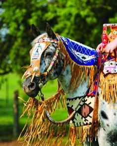 MN STATE FAIR HORSE SHOW