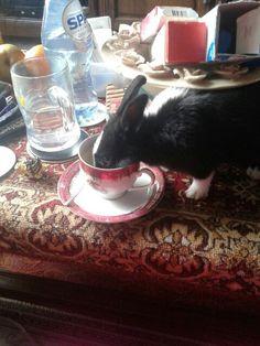 Ik ben bambino en ik zit lekker thee te drinken en doe jij ook thee drinken laat me weeten