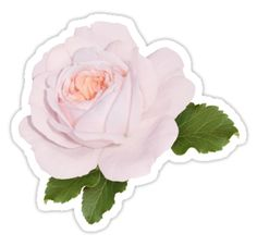 'Wonderful pink rose' Sticker by Olga Chetverikova Buy Stickers, Printable Stickers, Pink Flamingos Birds, Graffiti Doodles, Paris Wallpaper, Light Pink Flowers, Journal Stickers, Aesthetic Stickers, Lovely Things