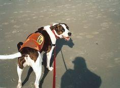 Jake is looking for a forever home! This sweet dog needs a home in Myrtle Beach! Please help.