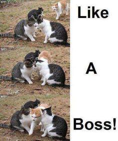 clamp cat :)