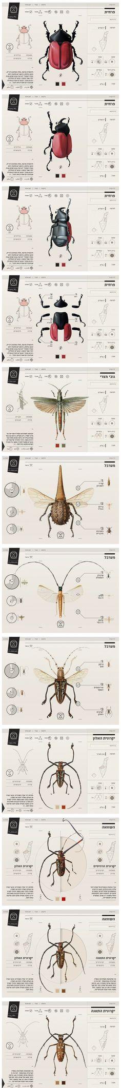 Insect Infographic   Designer: Johanna Rowe Calvi