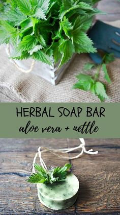 If you're looking for a soothing and hydrating soap, these homemade herbal soap bars are made for you! #aloeverarecipes, #aloeverasoap, #nettlesoap, #diyskincare, #homemadesoap Home Remedies For Pimples, Natural Acne Remedies, Herbal Remedies, Natural Essential Oils, Natural Oils, Natural Skin Care, Homemade Skin Care, Diy Skin Care, Diy Bio Cosmetics