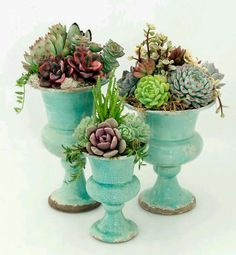 Obsessed with succulents