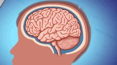 This Is What Happens To Your Brain When You Get A Concussion | We've put together an explanation of what actually happens to these football players' brains — or anyone's brain — when they get a concussion.  Right now your brain is perfectly balanced in your skull, suspended in cerebrospinal fluid that provides protection for the brain.