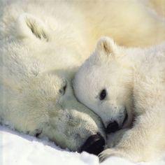 Fond d'écran gratuit, images et photos de nature et animaux