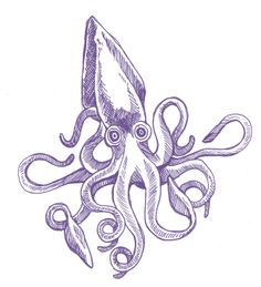 :: squid Squid Drawing, Sea Drawing, Line Drawing, Squid Tattoo, Octopus Tattoos, Animal Drawings, Art Drawings, Giant Squid, Mermaid Art