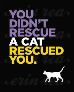 =^..^= Very true...Kitkat rescued me!