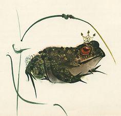 Mirko Hanak - The Bluebird - Frog    Published by Hamlyn in 1972, 2nd impression (1st publishd 1969). Story by Marie d'Aulnoy, adapted by Jan Vladislav... Illustrated by Mirko Hanak