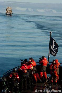 Sea Shepherd vessel The MY Bob Barker finds the Nisshin Maru in Mackenzie Bay during Operation Zero Tolerance, 2013