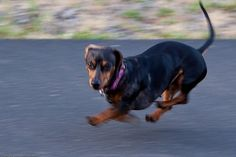 Speed Daisey