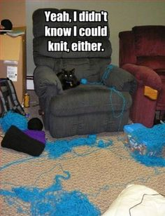 Knitting cat