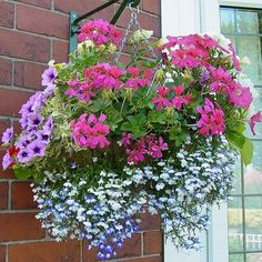 Summer basket: Has Petunia, geranium? and what the blue white flowers?