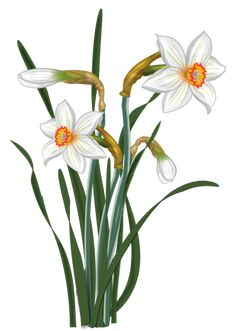 Folk Art Flowers, Hand Drawn Flowers, Botanical Flowers, Botanical Art, Botanical Illustration, Flower Art, Holly Hobbie, Watercolor Flowers, Watercolor Paintings