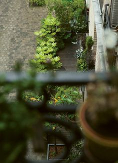 Quelques heures avec La Tonkinoise | L'instant Parisien L'instant Parisien