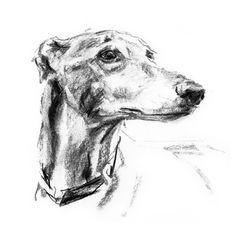 """Distance"" Sighthound Sketch Print – PaintMyDog | Dog Art | Contemporary Dog Portraits"