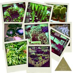 Holtwood Hipster: Holiday Floral // LA Flower District