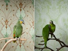 Birds Of A Feather, a live portrait series by Claire Rosen,