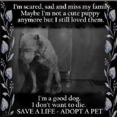 DON'T BREED OR BUY WHILE SHELTER PETS DIE! Opt to adopt!