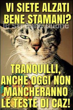 1000 images about buongiorno buonanotte buonasera on for Vignette buongiorno simpatiche