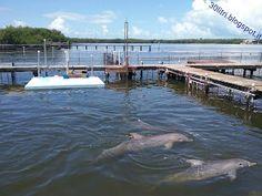 Florida Keys: tra delfini, buon cibo e barriera corallina / dolphins, good food and coral reef