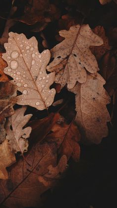 Autumn Aesthetic, Aesthetic Colors, Brown Aesthetic, Aesthetic Vintage, Aesthetic Outfit, Aesthetic Pictures, Aesthetic Backgrounds, Aesthetic Iphone Wallpaper, Aesthetic Wallpapers