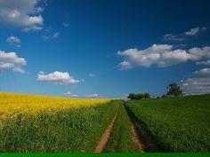 Super schöne Aufnahmen mit der Grundfarbe grün.