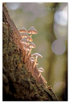 #paddestoel #paddestoelen #fotografie #photography #photograph #photo #foto #schagen #herfst #mooi #Beautiful #bokeh
