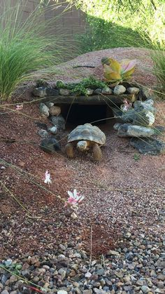 I have seen numerous suggestions for Russian tortoise diet Some great Some awful. Russian Tortoises are nibblers and appreciate broad leaf plants. Tortoise House, Tortoise Habitat, Tortoise Table, Turtle Cage, Turtle Pond, Pet Turtle, Red Footed Tortoise, Giant Tortoise, Outdoor Tortoise Enclosure