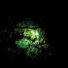 Incluso cuando el mundo se cierra sobre nosotros en oscuridad en incertidumbre y temor siempre habrá una luz que nos ilumine el camino.  #photography #trees #night #lights #thoughts #quote #instamoments #album