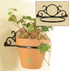 Image result for iron wall mounted plant holder