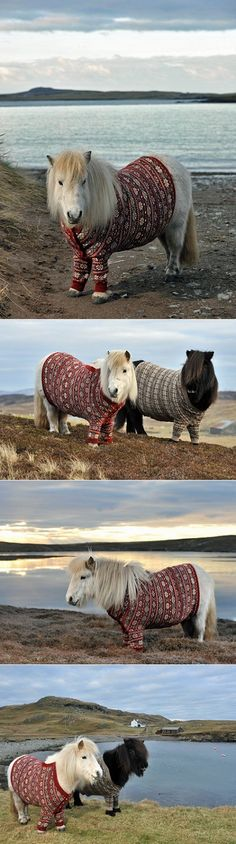 Horses in sweaters